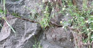 淵の森シマヘビ