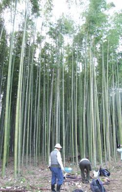 作業中の竹林