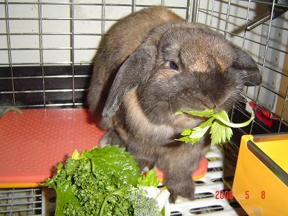 サラダを食べるジュンちゃん