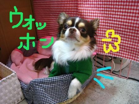 IMG_5187.jpg