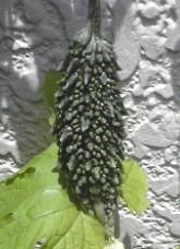 かしこさの種