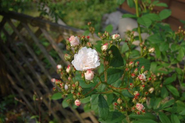 2008_0528_073150AA.jpg