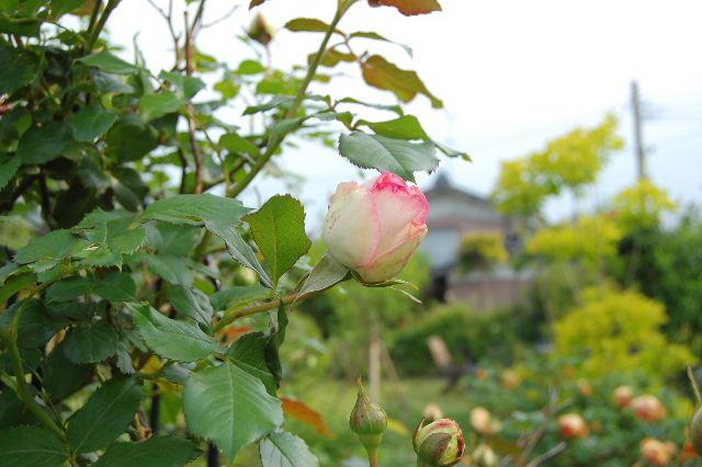 2008_0528_073442AA.jpg