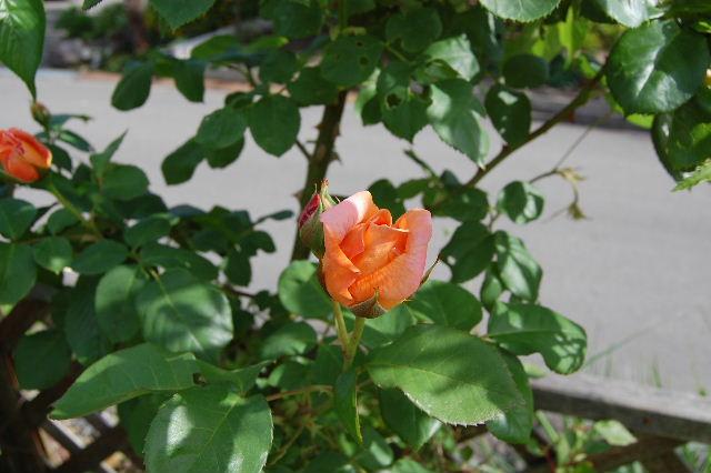 2008_0530_081127AA.jpg