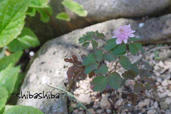 2008年庭の花
