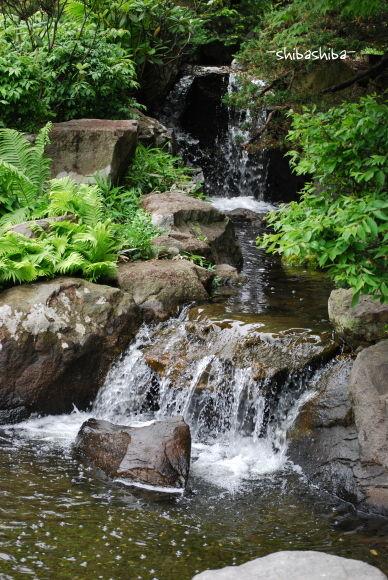 2008年百合が原公園庭園