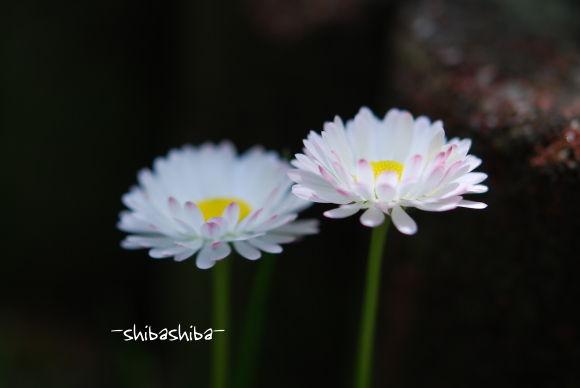 2008年6月花