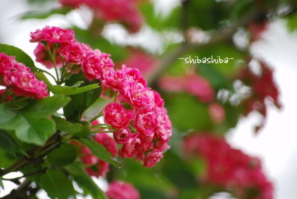 2008年小さい花