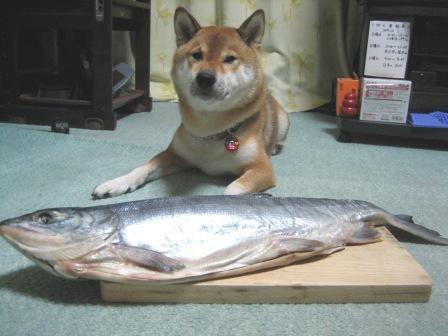 10gatuniboshi.jpg
