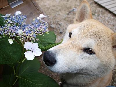 お花とお鼻 つん♪