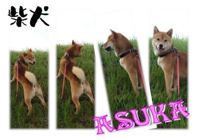 asuka11