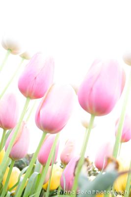 20080421-05.jpg
