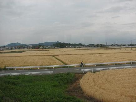 黄金の麦の海をゆく