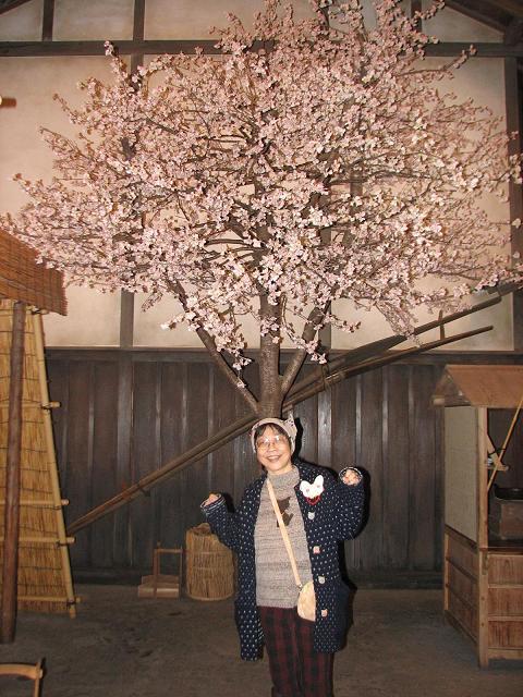 お江戸の桜