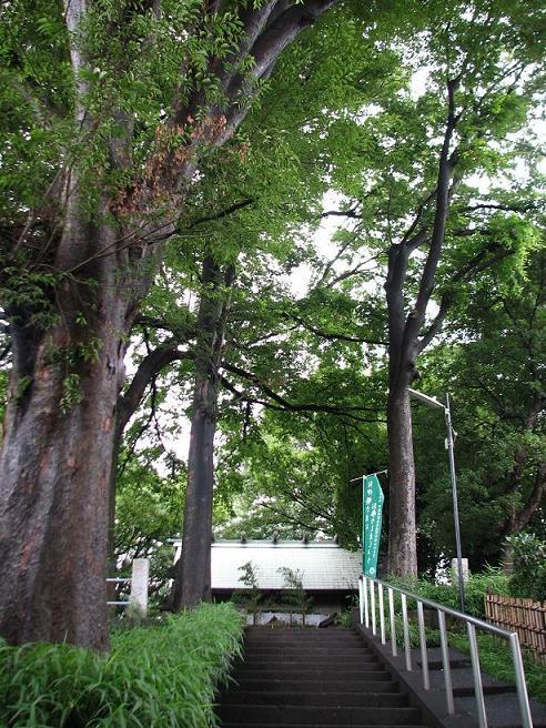 杉山さんの参道