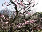 大阪城公園④