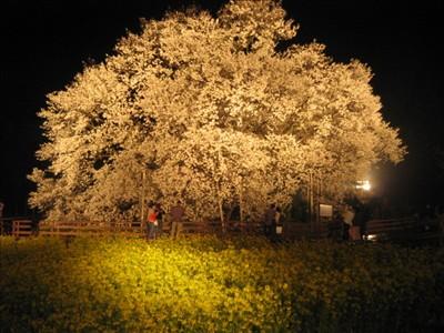 news20070402_02_03.jpg