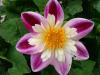 2008-5-28 070_convert_20080529114144
