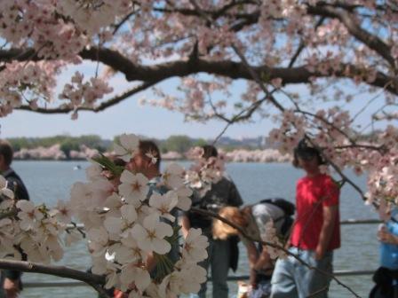 blossom_002