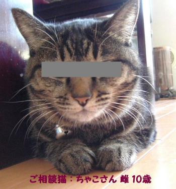 相談猫ちゃこ