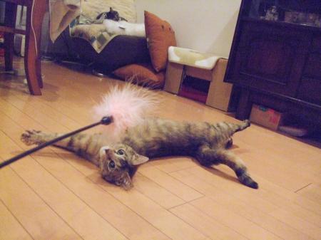 猫じゃらし2