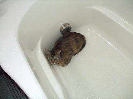 お風呂でしゃあ