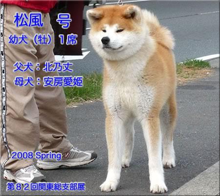 matsukaze208.jpg