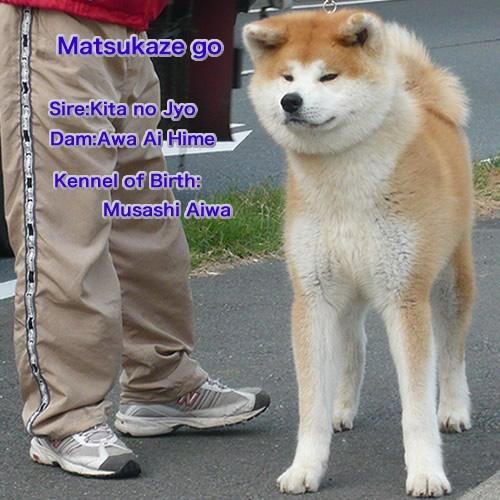 matsukaze3.jpg