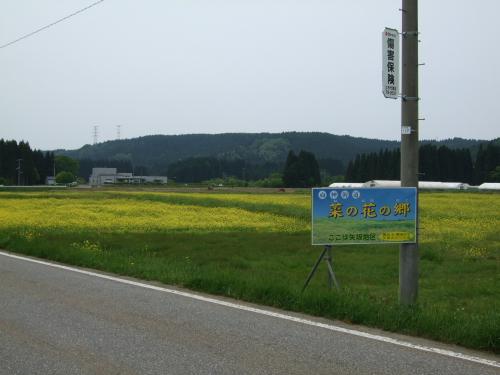 菜の花の郷