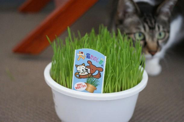 犬猫たのし草