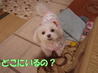 P4130701.jpg