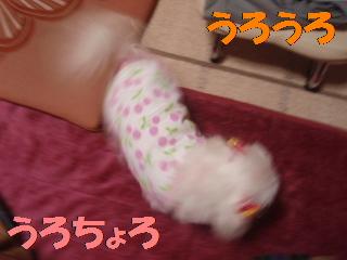 P4130703.jpg