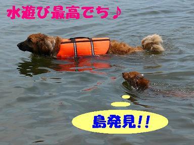 佐川BBQ 036