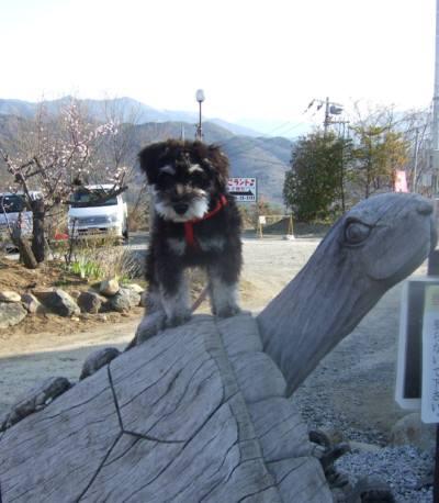 2008_0329shizuku0027.jpg
