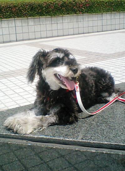 2008_0615shizuku0064.jpg