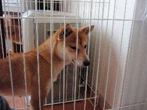 クンクン…やっぱりアタシの仔犬ちゃん???