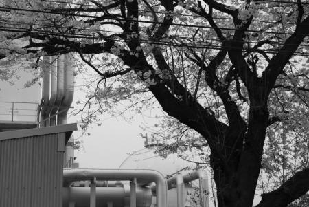 sagamihara_080404-1