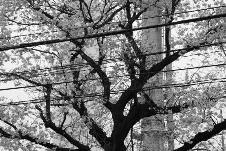 sagamihara_080404-3