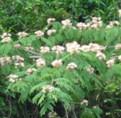 ハウスクリーニング道中の花1