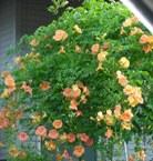 ハウスクリーニング道中の花2