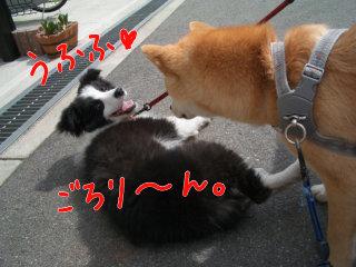 ノエルちゃん、誘う!?