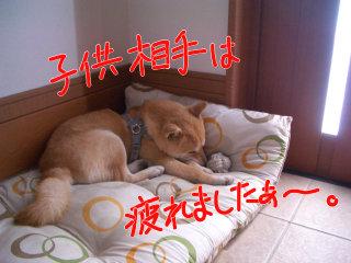 玄関で、疲れて寝るコロ助。