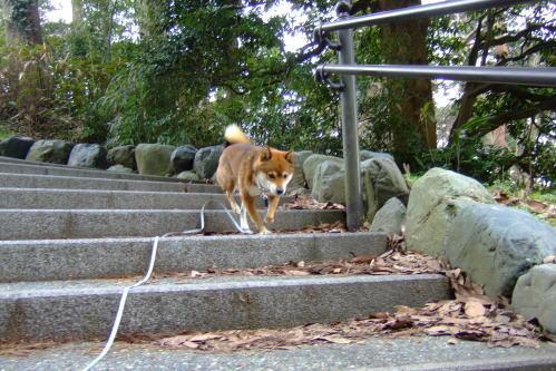 階段を下ろう!
