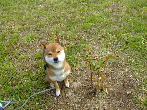 桜と背くらべ