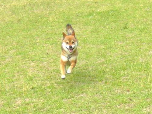 走るのスキ