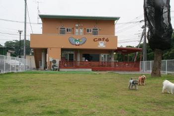 20060603ドッグカフェ1