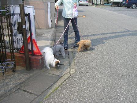 20060603お散歩