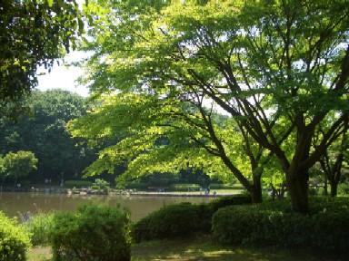b大池公園1