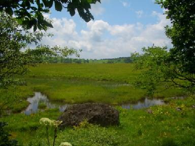 b八島湿原2