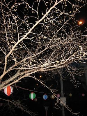 滝宮桜つぼみ1